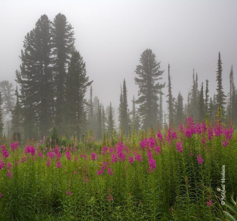 Туман, Ергаки